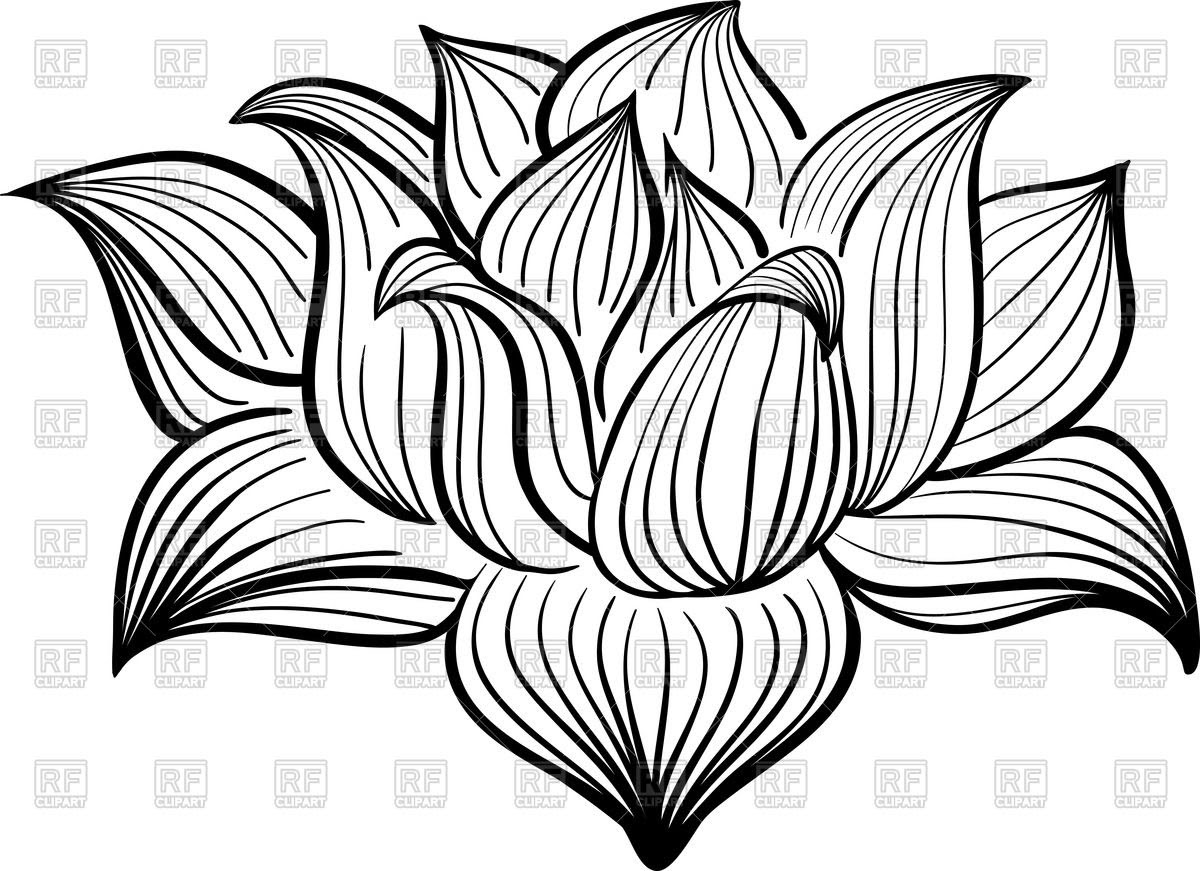 Lotus Flower Drawing Color At Getdrawingscom Free For Personal