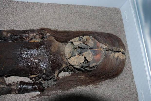 A pesar de estar alojada en el museo arqueológico de la Universidad de Tarapacá, el pecho negro de esta momia de Chinchorro muestra signos de degradación.
