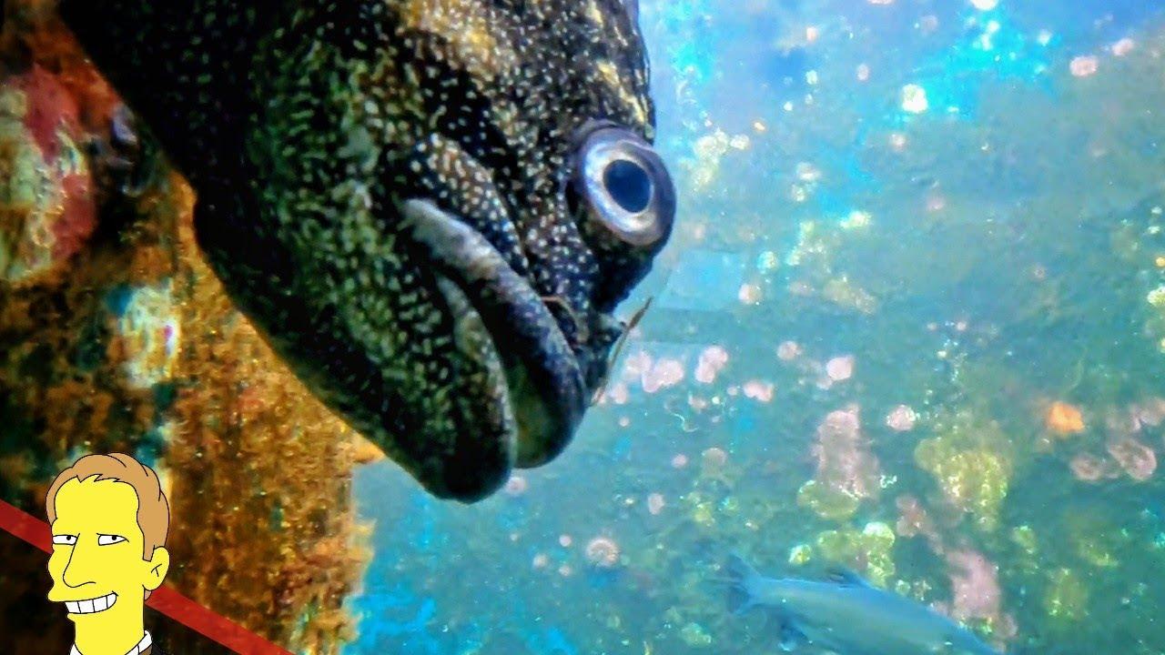 cloe up of a fish at the Seattle Aquarium