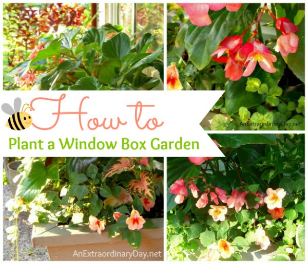 Tutorial & Tips :: How to Plant a Window Box Garden ::  AnExtraordinaryDay