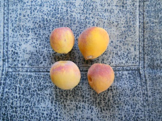 Drought 2011 Peaches