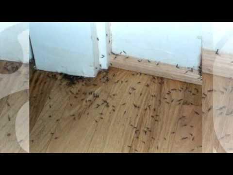 Best drywood termite treatment options