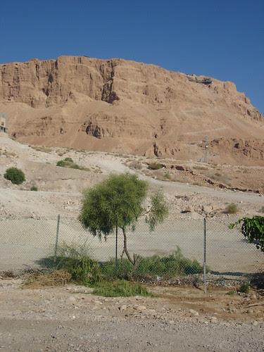 Massadah