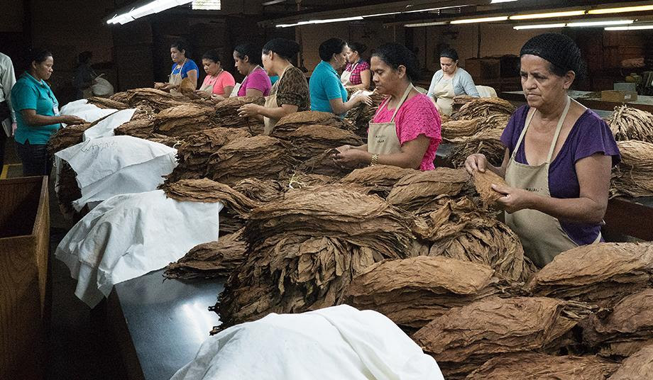 Most of the employees at the Tabacos de Oriente cigar factory in Danlí, Honduras, are women. After the tobacco leaves are cured, they are sorted by color and size. Photo by Kathy L. Gilbert, UMNS.