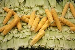 Mazorcas de Maiz