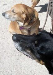 LolaSophie_dogpark_42912d