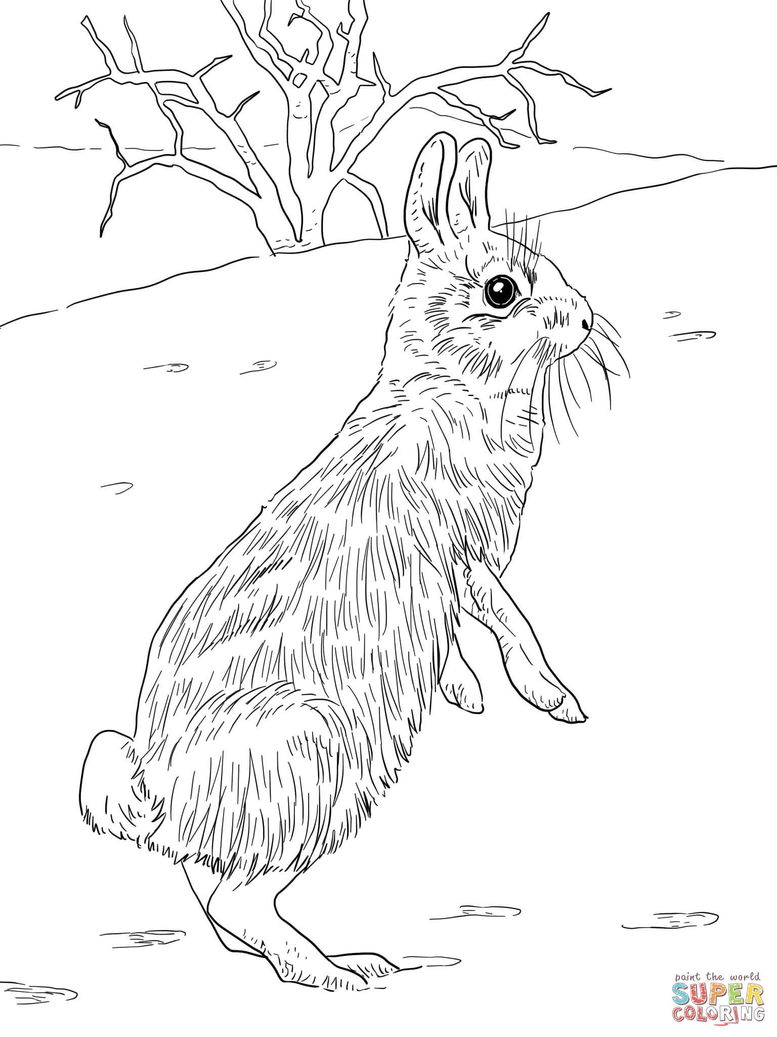 Ideas For Super Coloring Rabbit Anyoneforanyateam