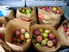 the haul, early October, 2007