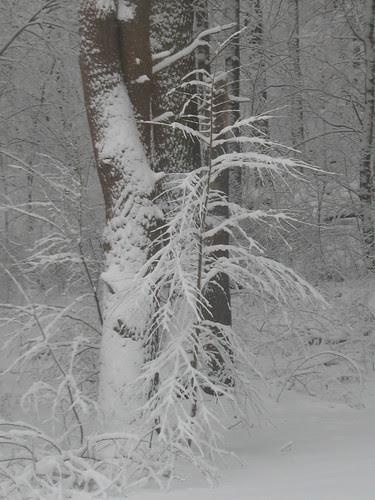 snowy14Jan08-8340