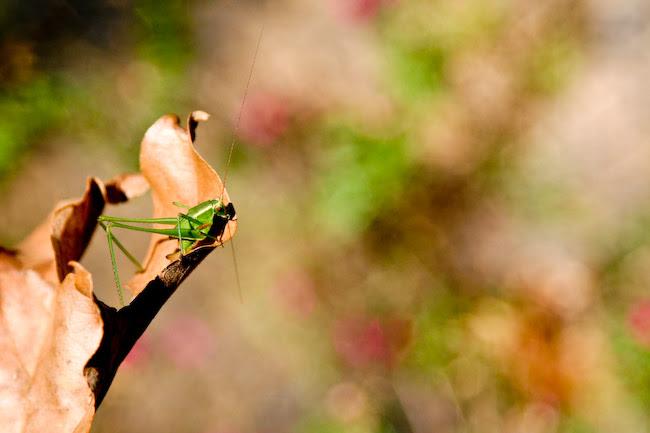 IMG_3520grasshopper