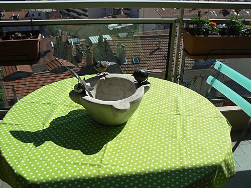 oiseaux sur la table.jpg
