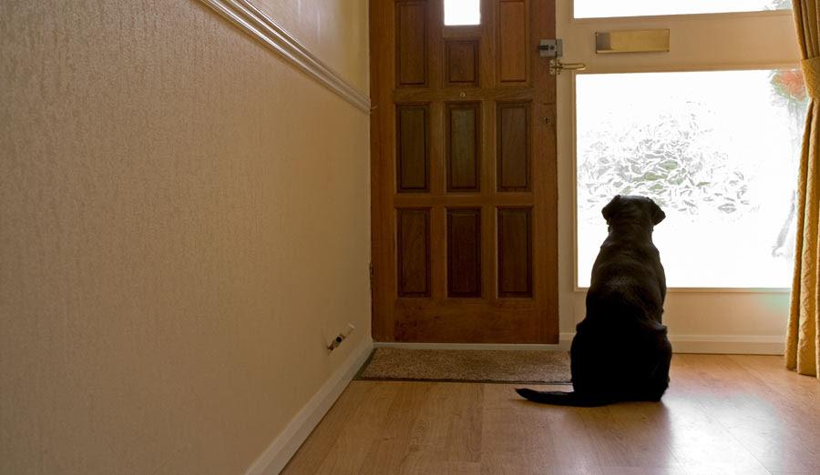 estrés por separación perros