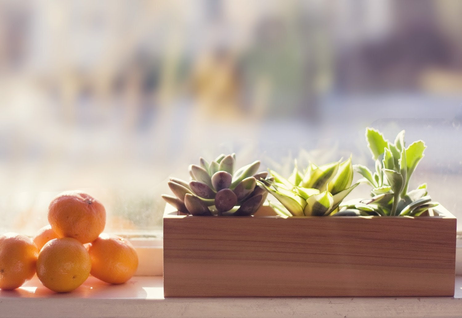 Minimalist Planter Box for Fresh Herbs or Succulents, Re-Milled Western Red Cedar Wood