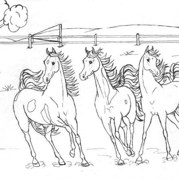 Cavalli Da Corsa Da Colorare Stampae Colorare