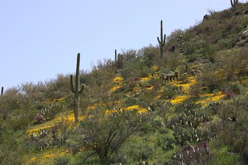 Springtime in Saguaro