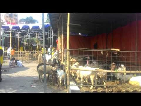 Video Suasana Penyembelihan Hewan Qurban di Lingkungan Masjid Pondok Hijau Ciputat