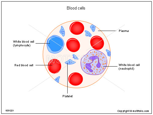 Blood cells 1031221