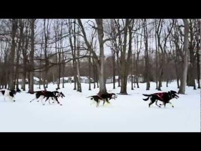 VIDEO: Pure Michigan Dog Sledding