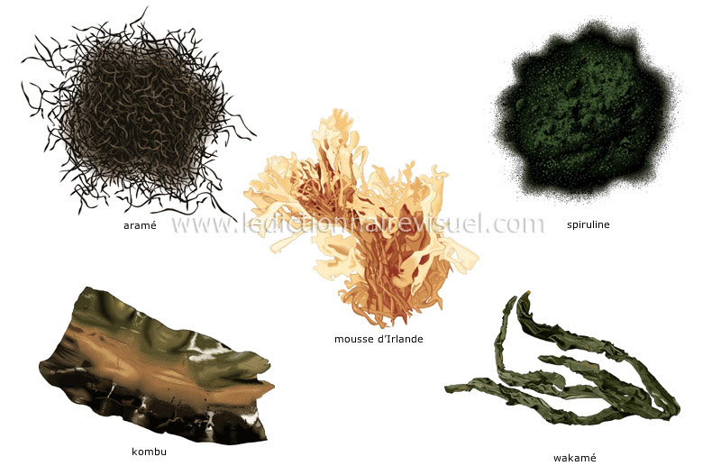 algues - Le Dictionnaire Visuel