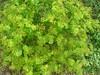 wildflowers hiliomoudou hania chania