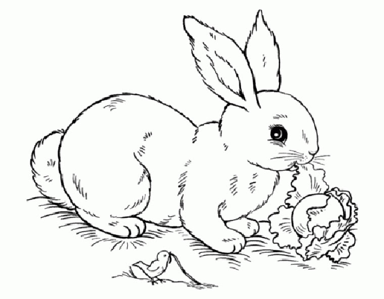malvorlagen kaninchen kostenlos