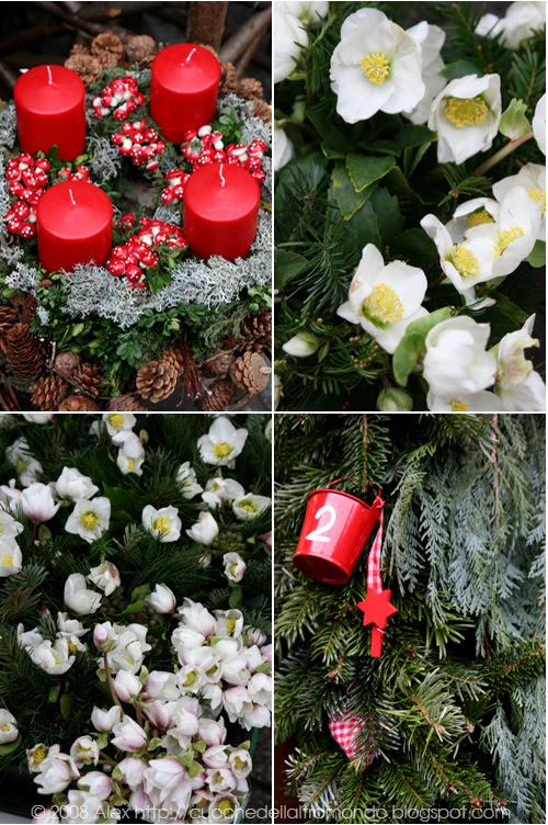 Flora natalizia