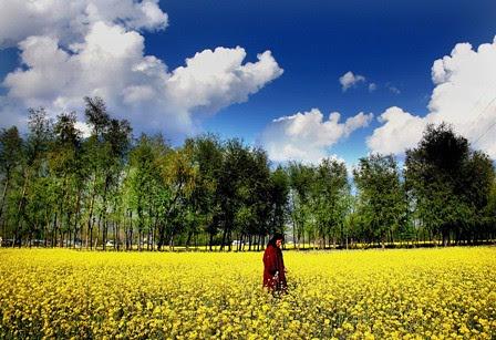 Kashmir,,,,,