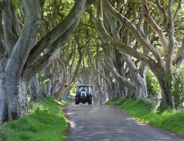 Amazing Tree Tunnel in the Northern Ireland