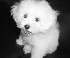 gilby in black and white at 4 months