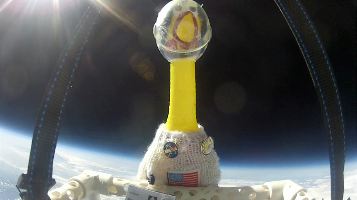Camilla, the rubber chicken who went to space