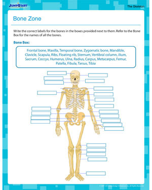 Bone Zone – Printable Human Anatomy Worksheet for 5th Grade – JumpStart