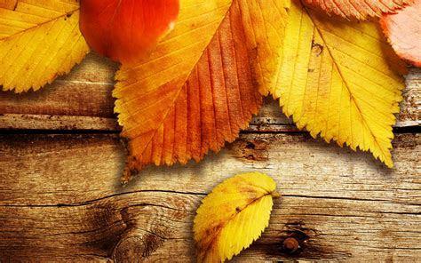 Free Autumn Wallpaper 20814 2560x1600 px ~ HDWallSource.com