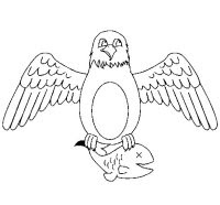 Disegni Aquila