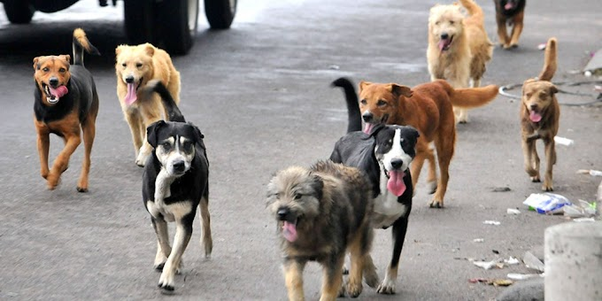 ¿Qué hacer si encontramos un perro abandonado?
