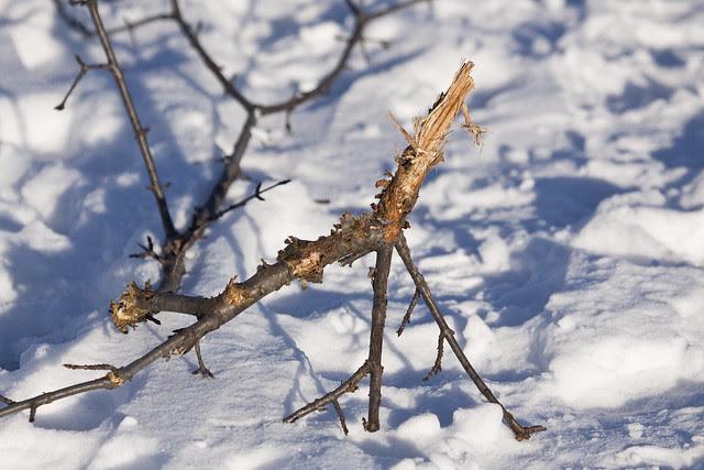broken branch2