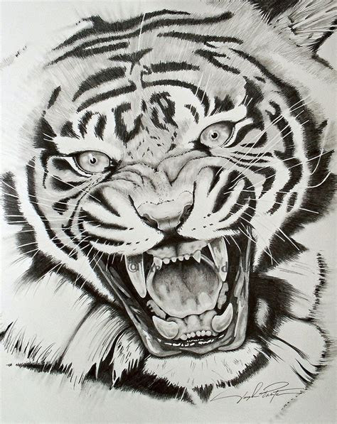 tiger drawing google search tatuagem de tigre ideias
