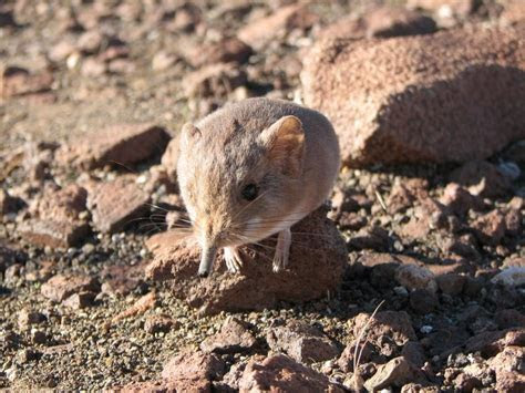 New species of small mammal discovered
