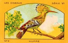 milliat oiseaux001