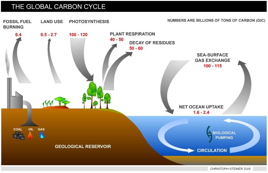 http://www.biochar.org/joomla/images/stories/steiner-globalcarboncycle-correct.jpg