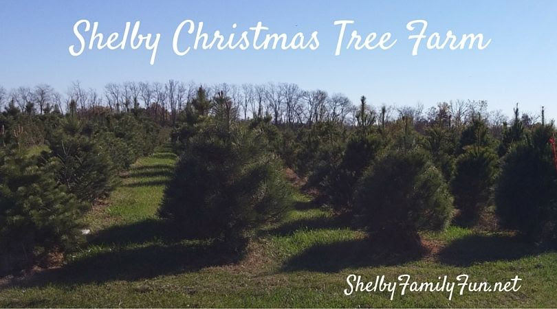 photo Shelby Christmas Tree Farm_zpsbsnwocfh.jpg