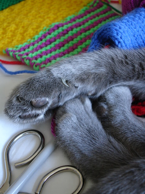 henrycat gets knitted! 017