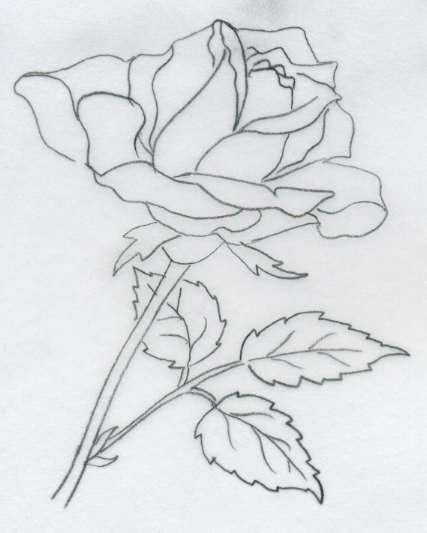 Cool Rose Drawings