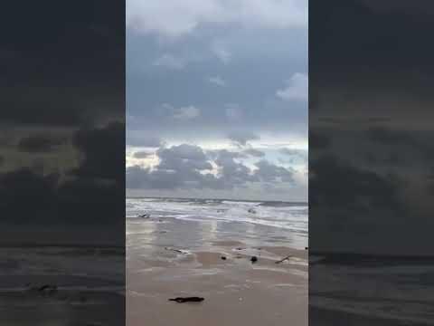 Jacaré assusta banhistas na Praia da Pedra do Sal em Parnaíba/PI