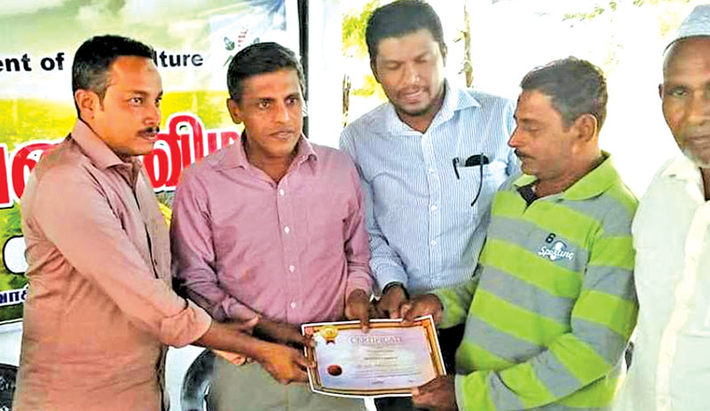 Ampara District Agriculture Deputy Director M.F.A. Zaneer and Akkaraipattu Pradeshiya Sabha Chairman M.A. Razeek present a certificate to a cultivator, at the harvest ceremony.