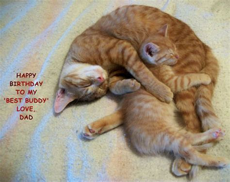 Birthday Cat For Your Son. Free For Son & Daughter eCards