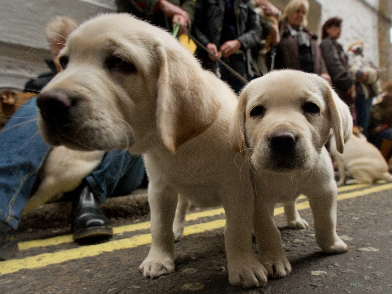 Best Dog Breeds  Business Insider