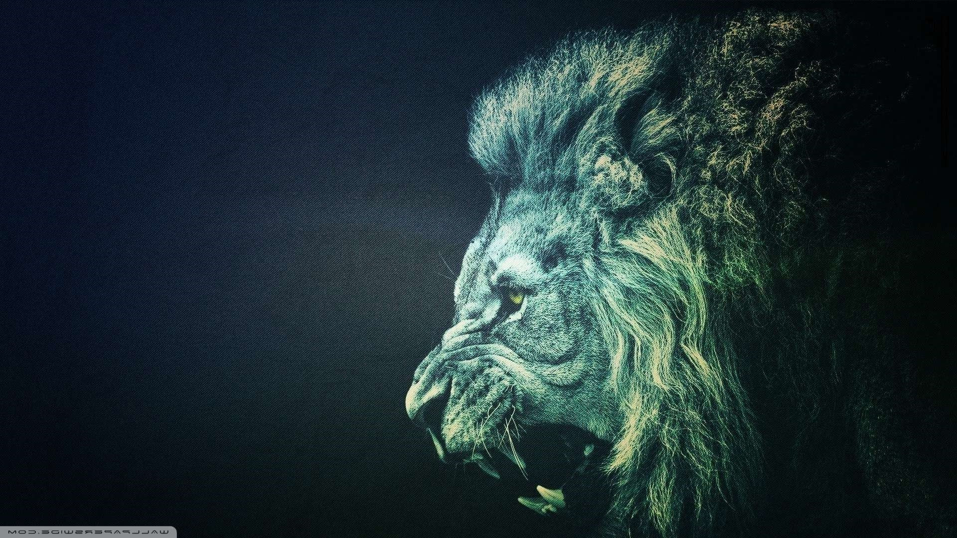 Roaring Lion Wallpaper 67  images
