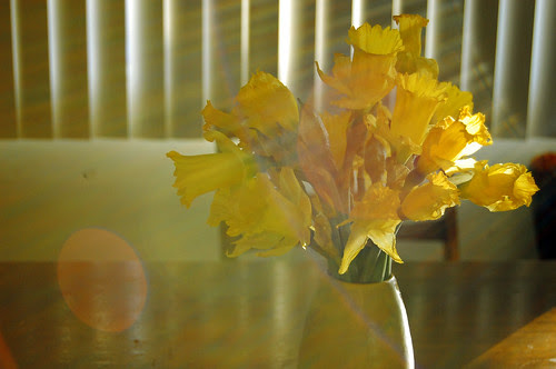 Daffodils + sun