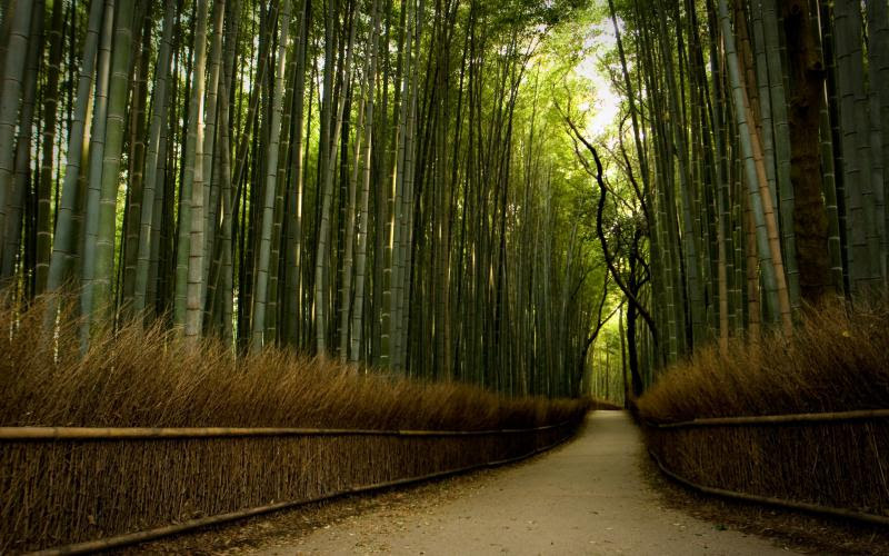 HD Bamboo Forest Wallpaper | Download Free - 49247