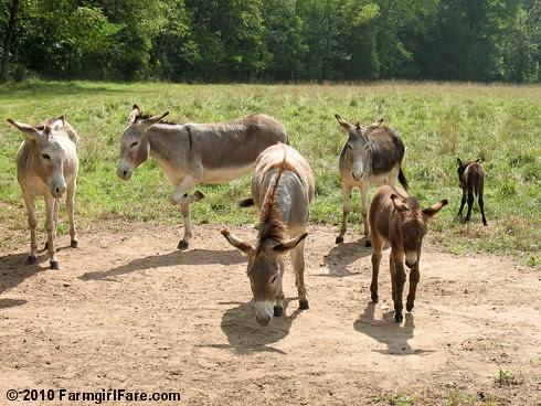 Donkey Group Shot 1